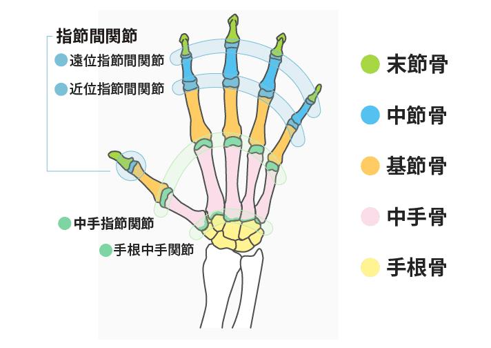 手の関節と骨 アトム法律事務所
